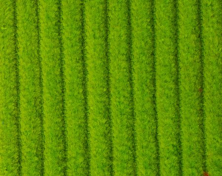 corduroy lime groen
